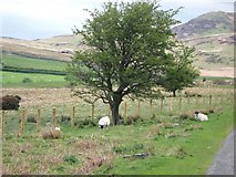 NX6060 : A hawthorn tree on Largoes Moor by Ann Cook