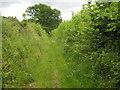 TQ5038 : Sussex Border Path near Jessup's Farm by David Anstiss