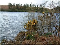 SX6870 : Looking across Venford Reservoir by David Gearing