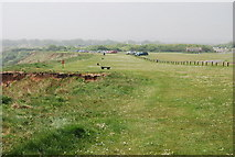 TA1281 : Cliff top, Filey Country Park by N Chadwick