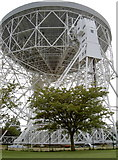 SJ7971 : Lovell telescope by a tree by Neil Owen