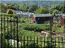 SK3583 : Allotments adjacent to Meersbrook Park by Neil Theasby