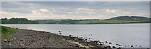 NU1535 : The west end of Budle Bay by Andrew Curtis