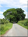 SJ8061 : Brookhouse Lane by Peter Whatley