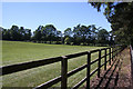 TL6761 : Paddocks at Beech House Stud by Bob Jones