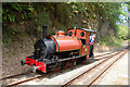 SH6806 : Sir Haydn running round train at Nant Gwernol by John Firth