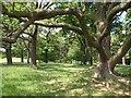 TQ1973 : Conduit Wood, Richmond Park by Derek Harper