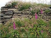 SW8471 : Cornish hedge by Val Pollard