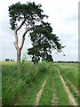 TL7167 : Wind Shaped Trees by Keith Evans