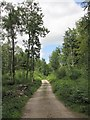 SD4586 : Forestry Road through Watson's Wood by K  A