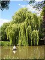 SU7347 : Long Sutton Pond by Colin Smith