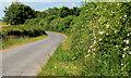 J4767 : The Ballygraffan Road near Comber by Albert Bridge