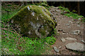 NO2775 : Mossy boulder in the forest by Nic Bullivant