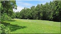 NS3882 : Parkland, Balloch by Richard Webb