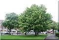 TQ3070 : Chestnut trees, Streatham Common by N Chadwick
