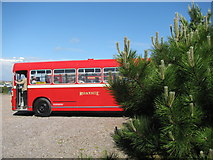 ST1167 : Bus and Fir Tree by David Roberts