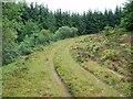 NN0619 : Forestry track by Patrick Mackie