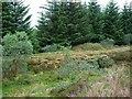 NN0518 : Forestry track by Patrick Mackie
