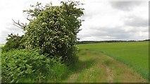 NS8384 : Farm track, Torwood by Richard Webb
