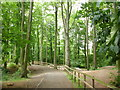 NZ4215 : Woodland path near to the River Tees by Peter S