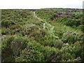 SK3069 : Path across Beeley Moor by Chris Wimbush