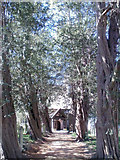 SU7507 : Yew-lined way to St John's church, Westborne by Slbs