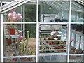 SP1725 : Flowering cacti by Michael Dibb