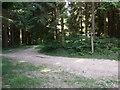 SU8416 : Bridleways cross in Linchball Wood by Shazz