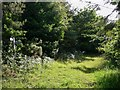 SU8516 : Bridleway in Newfarm Plantation by Shazz