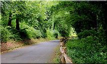 J4681 : Entrance Road, Crawfordsburn Country Park by Albert Bridge