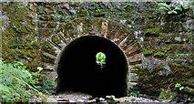 J4681 : Tunnel, Crawfordsburn Country Park (1) by Albert Bridge