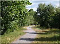 SX8771 : Cycle track, Aller Brook Local Nature Reserve by Derek Harper