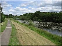 NZ3210 : River Tees in Neasham by Chris Heaton