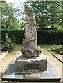 SZ0196 : Broadstone's oldest tree by John Palmer