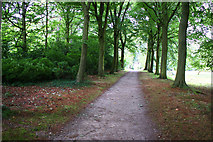 SD4615 : A path through the gardens of Rufford Old Hall by Ian Greig
