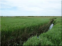 TG0444 : Cley: reed beds largely obscuring a small creek near the windmill by Keith Salvesen