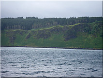 NM4758 : Ardmore clifftop conifer plantation by C Michael Hogan