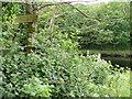 NX4154 : River Bladnoch by Andy Farrington