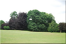 TG1908 : Woodland, Earlham Park by N Chadwick