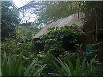 SX0455 : Jungle dwelling in the Rainforest Biome - Eden Project by Neil Theasby