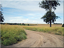 TR2951 : Cropland at Beeches Farm by Oast House Archive