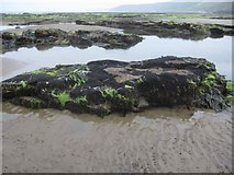 TA0487 : Mussel beds in  South Bay by John S Turner