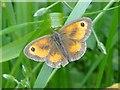 TM4268 : Gatekeeper Butterfly by Adrian S Pye