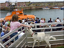 NT6779 : The Goat and Lifeboat, Victoria Harbour, Dunbar by Richard West