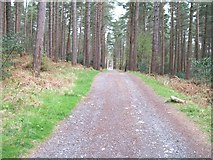 J3629 : The upper forest road by Eric Jones