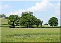 ST6055 : 2010 : Oak trees north west of Hollow Marsh Lane by Maurice Pullin