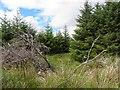 C0412 : Forest area, Cornagullion by Kenneth  Allen