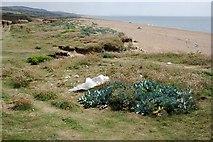 SY5088 : Sea Kale, Thrift and Bubble Wrap by Tony Atkin
