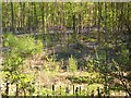 SU9295 : Priestlands Wood by michael