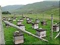 NN8332 : Heather honey production plant by M J Richardson